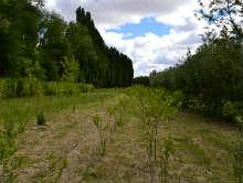 Vivero de jacobacci vende plantas nativas y ex ticas adn for Vivero plantas nativas