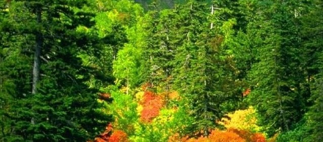Resultado de imagen para bosques en rio negro