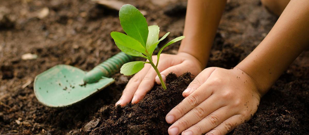 Beltr n puso en marcha un rbol para tu vereda adn - Plantar arboles frutales ...