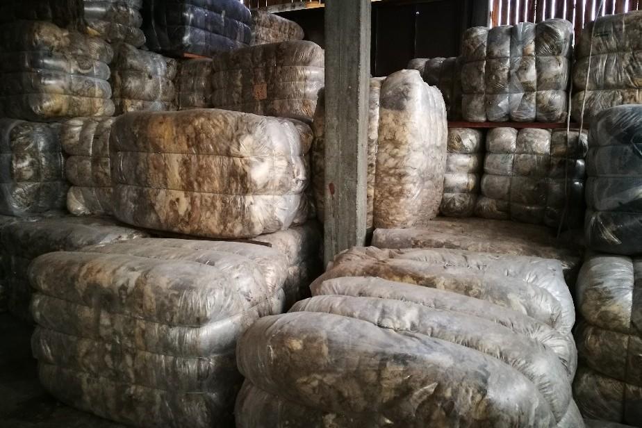 La lana se pagó USD 7,5 por kilo y alcanzó un valor histórico